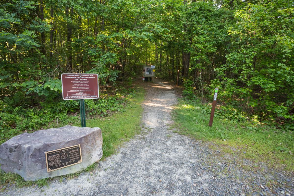 Chicopee Woods Bridge Loop. 