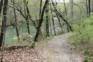 Medlock Bridge Trail System