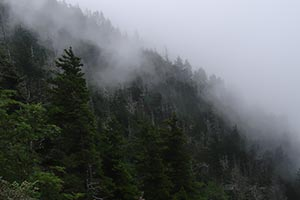Mt. LeConte via Alum Cave Trail