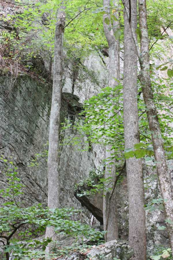 Raven Cliff Falls. 