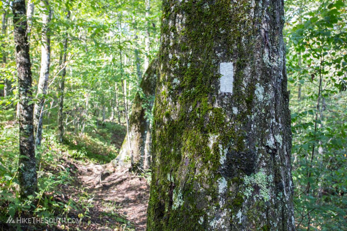 This hike follows the white-blazed Appalachian Trail northbound for most of the trip.