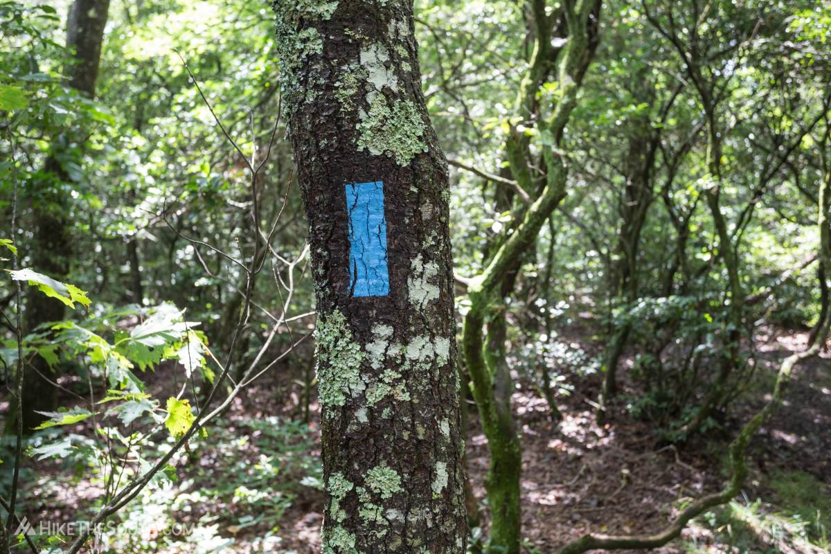 Wildcat Mountain. 